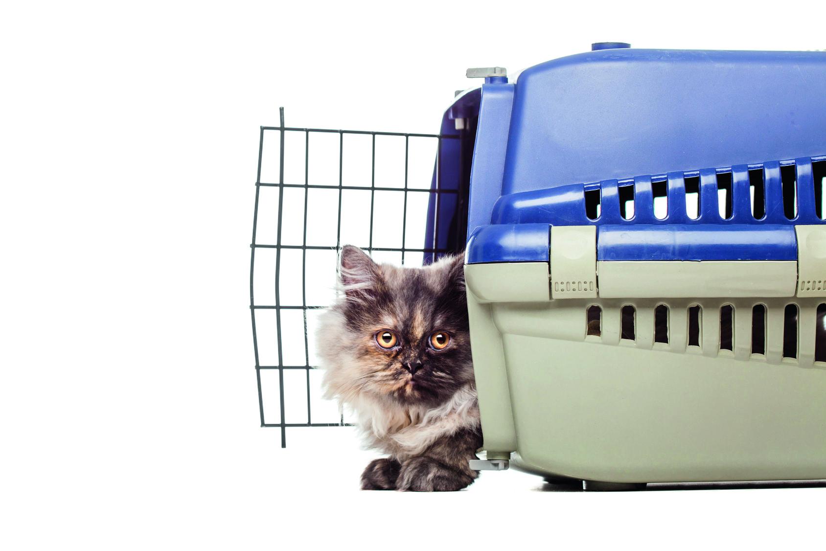 Les chat etrangers avec Top 22