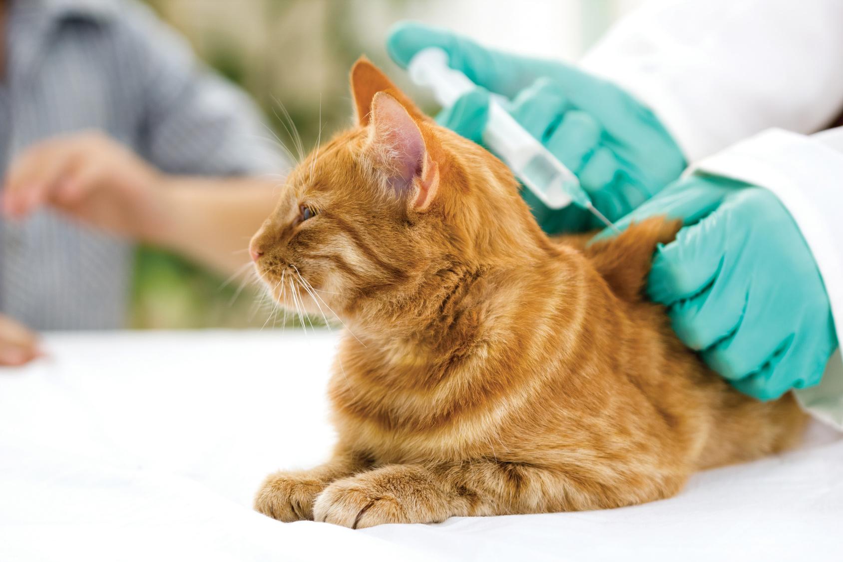 Vacciner son chien ou son chat un acte de protection - Chat ou chien ...
