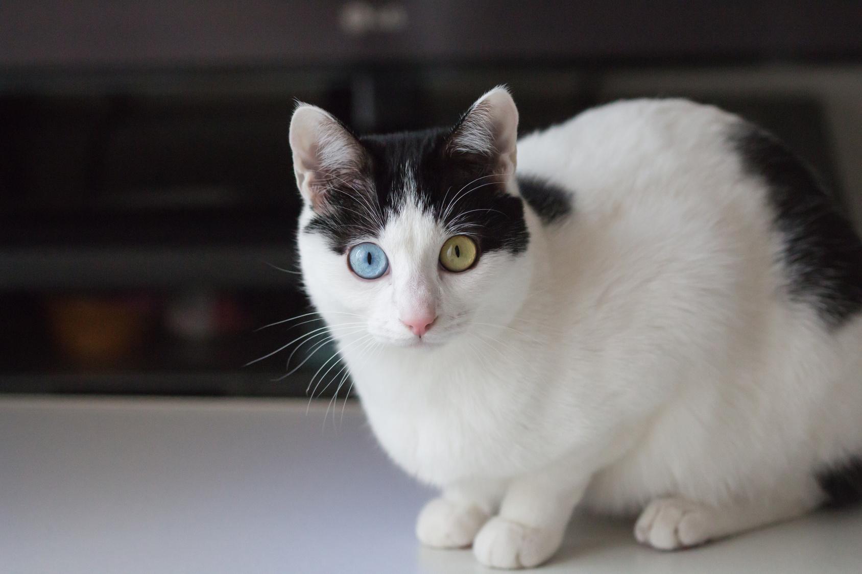 Le chat un animal tr s sensible au stress - Le chat de barbie ...